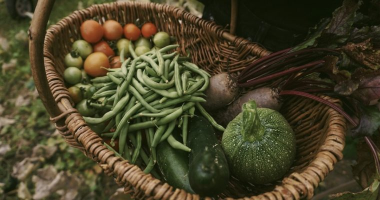 10 Reasons to Grow Your Own Food in 2021