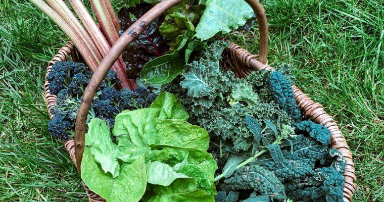 April Gardening Jobs – Preparing your kitchen garden for summer