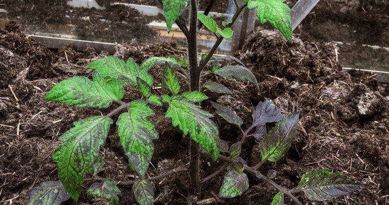 Heritage fruit and vegetables: Varieties I am most excited to grow this year