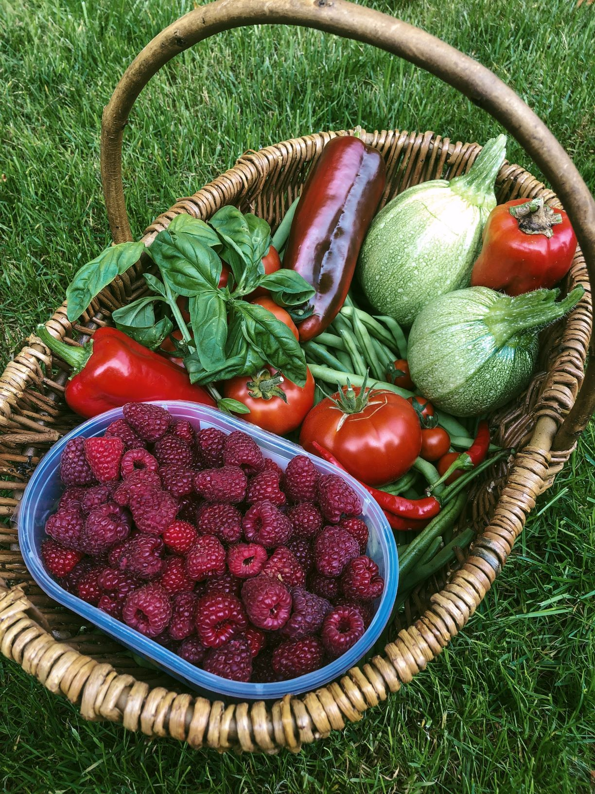 Allotment anniversary: our allotment journey and advice for beginners