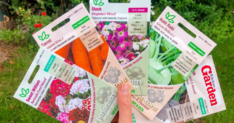 Seeds I'm sowing in July – Keeping the ground full and planning for autumn