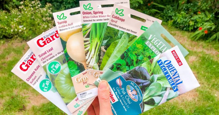 Vegetable seeds to sow in August for autumn, winter and early spring harvests