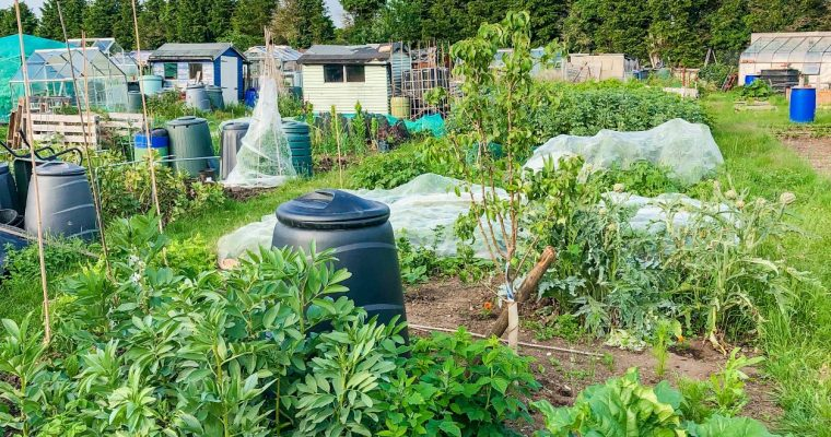 What gardeners can do to help the climate crisis